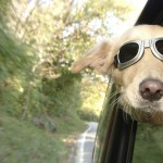 Viajar con animales